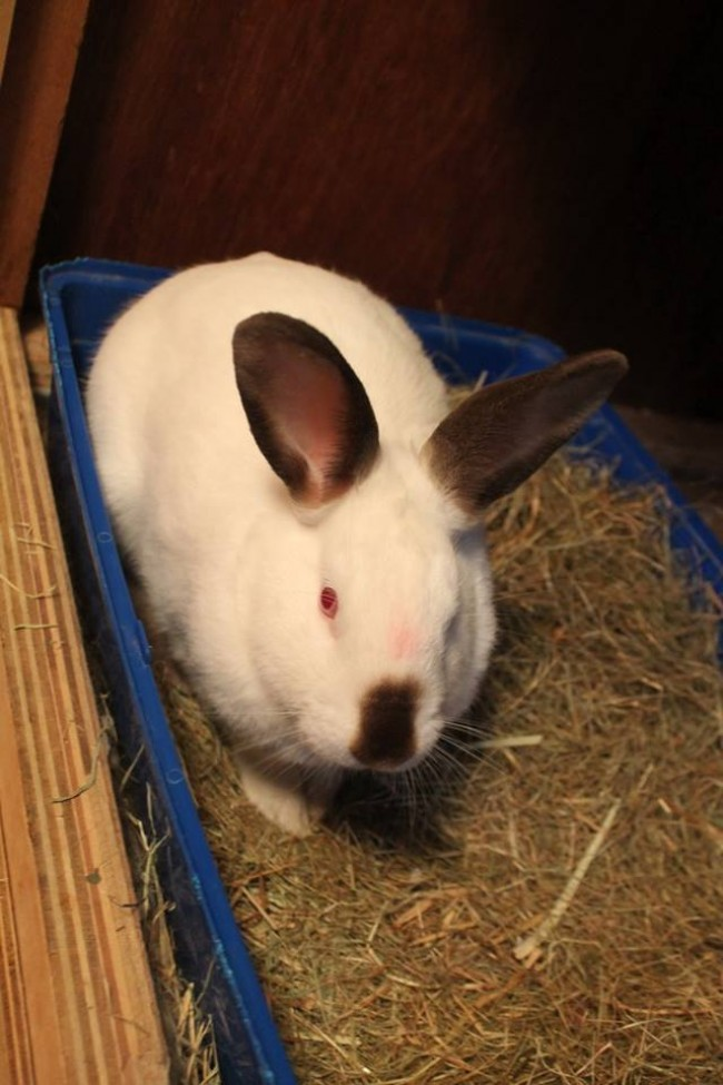 A Rabbit On A Crate Topped With Hays