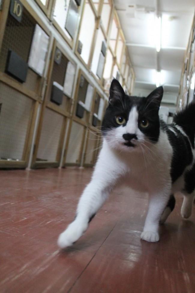 Kitty-Cat Midnight Crazies