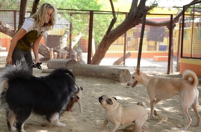 A Woman Letting the Dogs Socialize