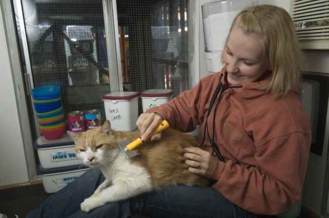 A Woman Grooming a Grown Cat