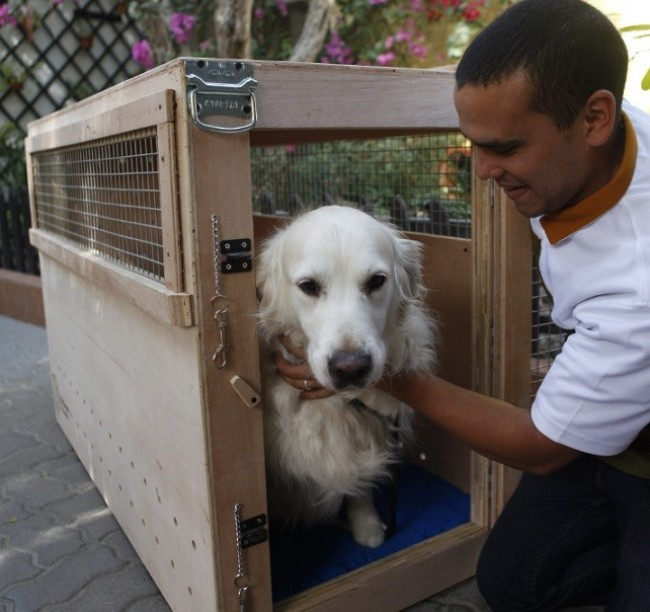 The Value of Pet Relocation Services When Moving