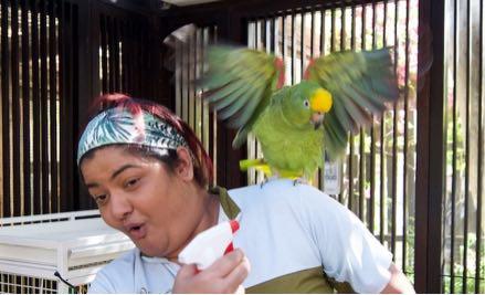 Birds Vet • Bird Care & Treatment • DKC • Dubai, UAE