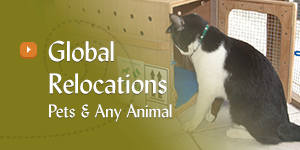 animal relocations