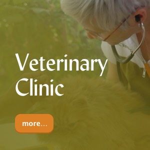 DKC Veterinary Clinic