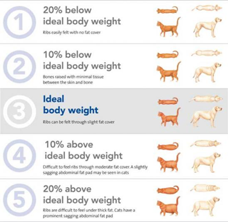pet ideal body weight