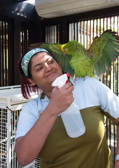 Birds Vet • Bird Care & Treatment • DKC • Dubai, UAE