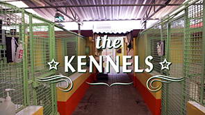 DKC Video Tour <br>Part 3 of 9 <span>Our Kennels</span>