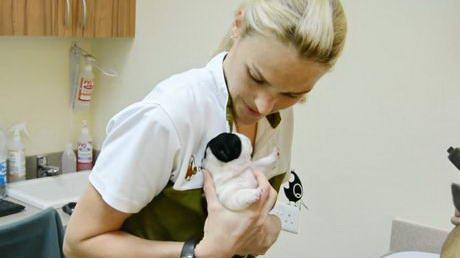 New-born Pups in Consultation